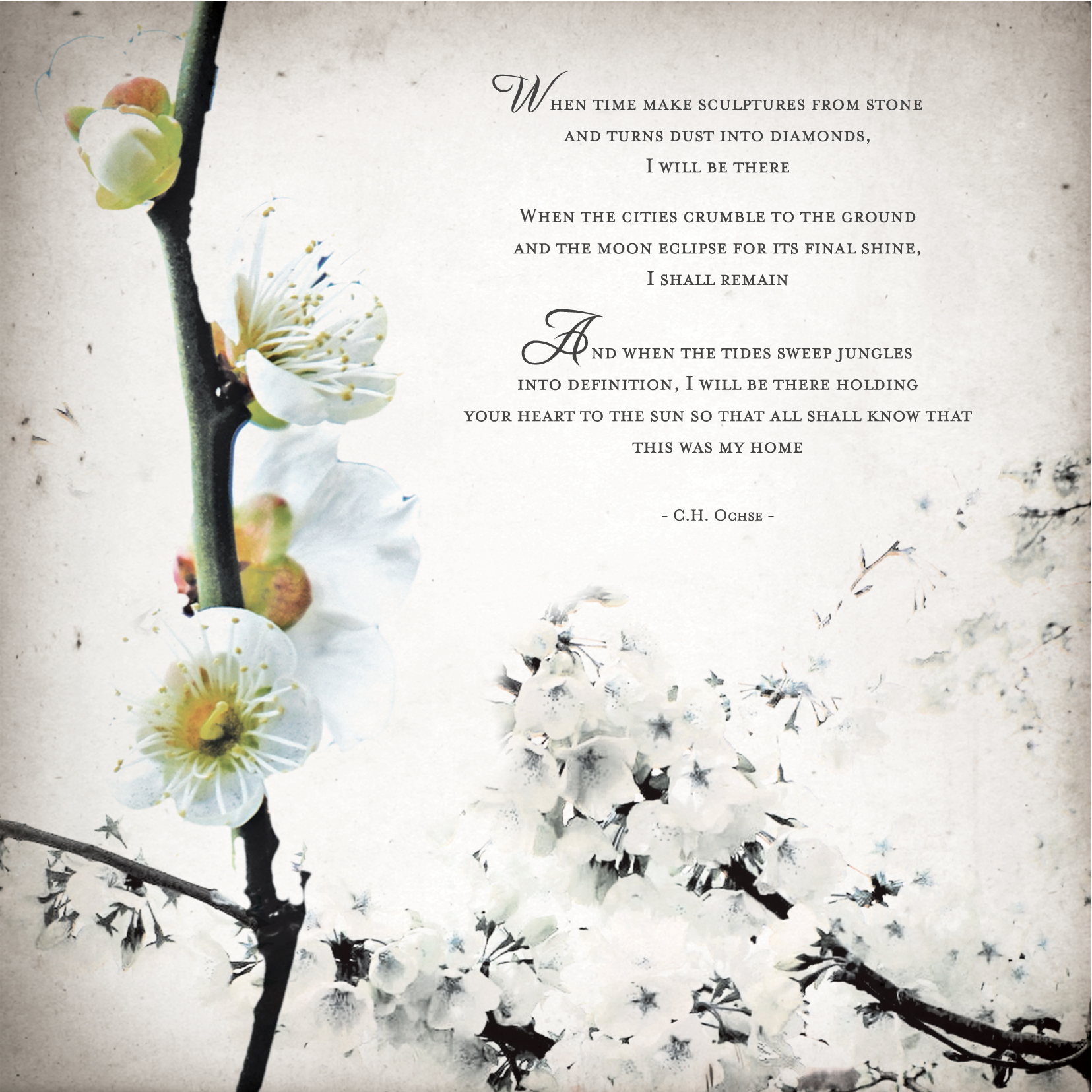 We used the blossoms effect in our wedding invitation as well with a poem